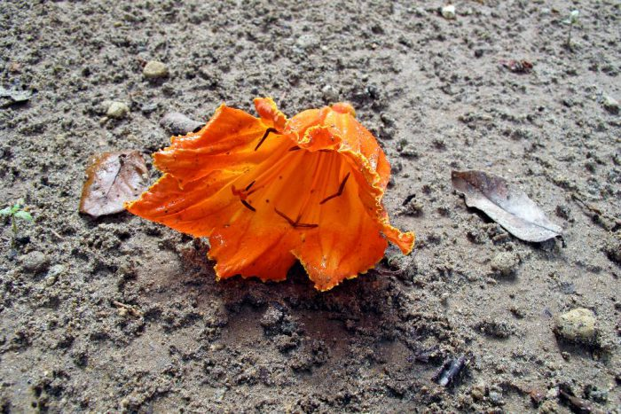 Artistic photograph of a flower fallen on the ground.