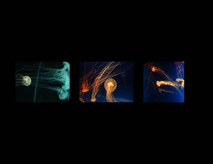 Artistic arrangement of a collection of jellyfish.