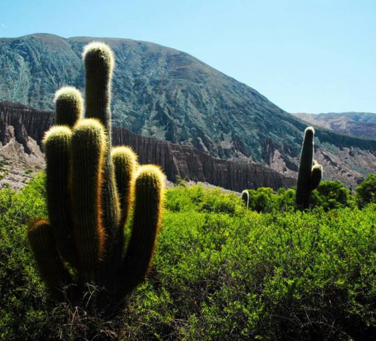 Landscape of a beautiful cactus.